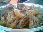 Closeup of harvested shrimp